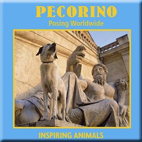 Pecorino - Posing Worldwide