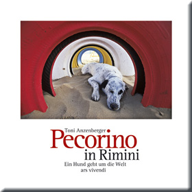 Pecorino in Rimini
